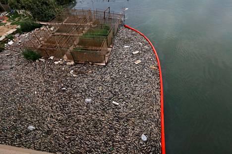 WHO:n selvityksissä on ilmennyt, että kalakuolemilla on yhteys jokivedestä löydettyihin raskasmetalleihin, ammoniakkiin sekä koliformisiin bakteereihin.