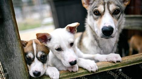Kummitoiminta on alkanut onnistuneesti myös All Huskies -yrityksessä.
