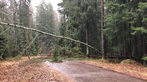 Vantaan Ilolassa tuuli kaatoi kaksi puuta tielle ja sähkölinjan päälle.