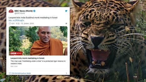 Leopardi tappoi puun alla meditoineen buddhalaismunkin Intiassa