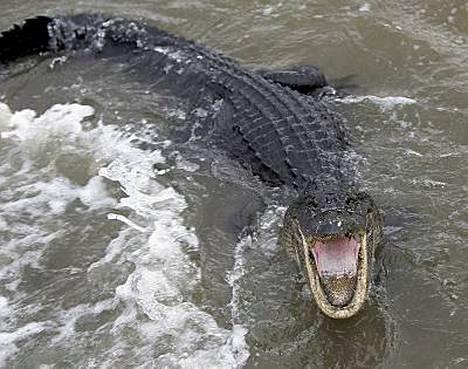 - Suuria käärmeitä ui tulvavesissä, kertoivat kanadalaisen Globe and Mail -lehden toimittajat Galvestonin kaupungista.