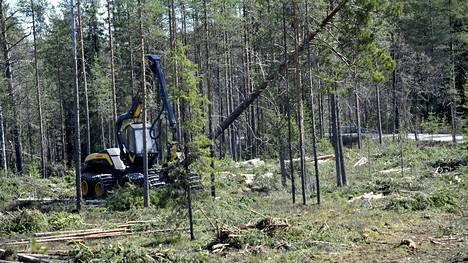 Metsä Group on ilmoittanut tarvitsevansa Kemiin kotimaisen lisäksi tuontipuuta. Myös Kaidin biojalostamo voisi tuoda puuta Ruotsista ja vähemmässä määrin Venäjältä.