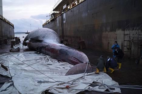 Valas nostettiin maihin Napolissa.