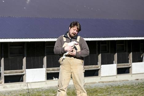 Mikko Välttilä opettaa kädestä pitäen uusia kanoja syömään, nukkumaan ja munimaan oikeassa paikassa.