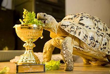 Manu juhli voittoaan salaatilla.