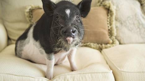 Söpönä myyty lemmikki hajotti kuusi sohvaa ja keittiön – vasta silloin omistaja luovutti
