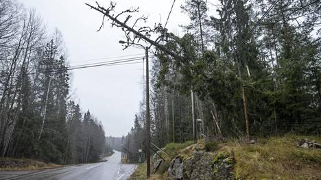 Myrsky kaatoi puita sähkölinjojen päälle marraskuussa.