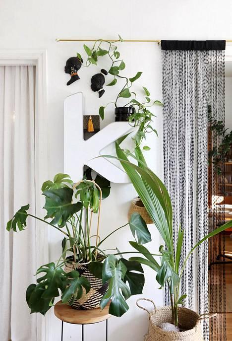 Viherkasvit ovat yksi kodikkuutta lisäävä tekijä sisustuksessa.