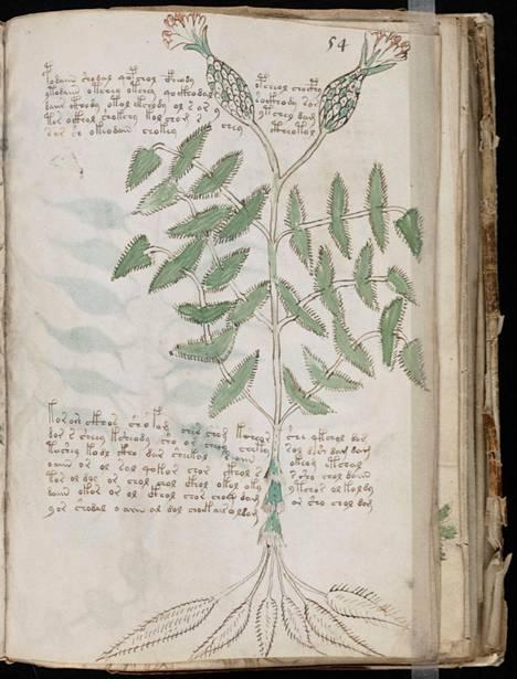 Suurin osa käsikirjoituksen kasveista on pystytty tunnistamaan. Niitä esiintyy pääsääntöisesti Alppien alueella. Sivun yläreunan sivunumerointi noudattaa tuntemaamme merkistöä.