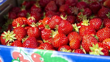 Monelle on jäänyt tavaksi säilöä iso määrä mansikoita pakkaseen talven varalle.
