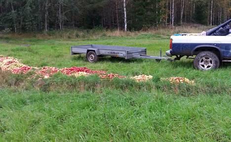 Jos sinulla on ylimääräisiä omenoita, kannattaa ottaa yhteyttä metsästysseuroihin. Metsästäjät vievät omenat metsään hirvieläimille.