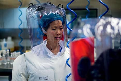 Kiinalainen virustutkija Shi Zhengli ja hänen tutkimusryhmänsä työ mainitaan tiedusteluraportissa.