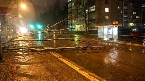 Tielle kaatunut puu Helsingin Munkkivuoressa.