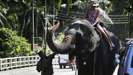 Norsu pystyy käyttämään kärsäänsä monenlaisiin tarkoituksiin. Kuvan norsu ei liity juttuun.