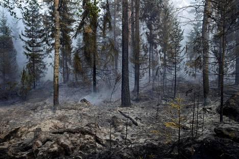 Ruotsin Pyhärannan metsäpalot olivat poikkeuksellisen rajuja tänä kesänä.