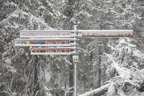 Lumipyry peitti kaiken alleen Kolin kansallispuistossa.