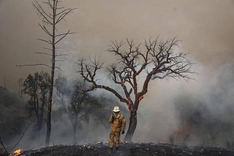 Muun muassa Portugalissa on tänä kesänä ollut ennätyksellisen kuumaa. Kuumuuden ja kuivuuden myötä metsäpalot ovat päässeet valloilleen.