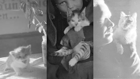 Keräsimme kuvia sota-aikana kuvatuista kissoista.