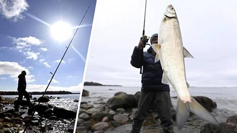 Siian onginta on todellinen trendilaji, ja huhtikuu on parasta pyyntiaikaa Etelä-Suomen rannoilla.