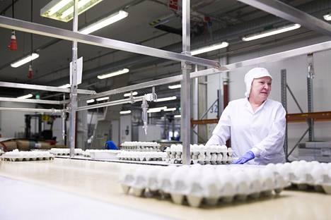 Ritva Haatanen tulppaa täytettyjä munia. Haatanen on työskennellyt Fazerilla 20 vuotta.