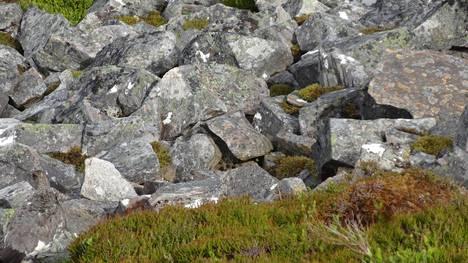 Jälleen kalliota, mutta onko arvoitus äskeistä kuvaa helpompi vai vaikeampi?