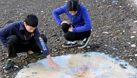Australialainen Limin perhe löysi rannalta kummajaisen.