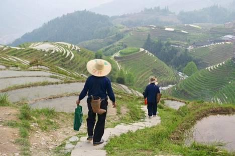 Longjin riisiterasseilla saa nauttia levollisista näkymistä kävellessään. Helppokulkuiset polut vievät näköalapaikoille ja kyliin.