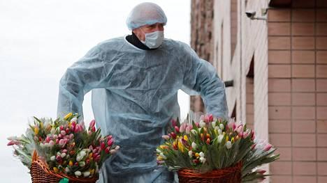 Venäjällä vietettiin vastikään naistenpäivää myös karanteenissa. Suojapukuun pukeutunut mies vei kukkia pietarilaisille, koronaviruskaranteenissa oleville lääketieteen opiskelijoille.