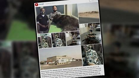 Yhdysvaltalaisyrityksen väitetään tappaneen 24 koiraa Kuwaitissa.