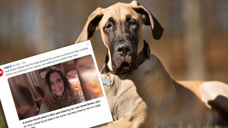 Poliisi uskoo, että tanskandoggit raatelivat 49-vuotiaan Mary Matthewsin Ohiossa. Kuvan koira ei liity tapaukseen.