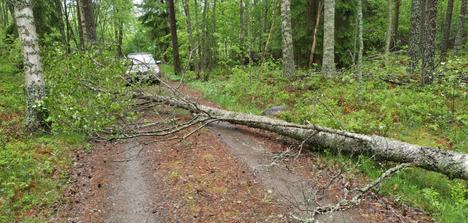 Myrsky kaatoi puun Pälkäneellä.