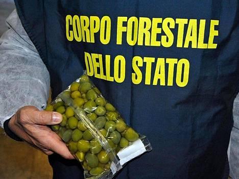 Italian viranomaiset takavarikoivat 85 tonnia kuparisulfaatilla värjättyjä oliiveja