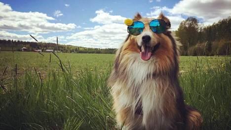 Seppo-koira on melkein aina loistotuulella – sympaattinen somekoira kertoo kirjassaan myös kauhukokemuksestaan