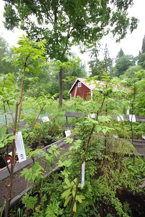 Puistossa voi ihastella peräti 100 havu- ja 130 lehtipuulajia sekä useita koristepensaita, kuten alppiruusuja sekä köynnös- ja perennalajeja ympäri maapalloa.