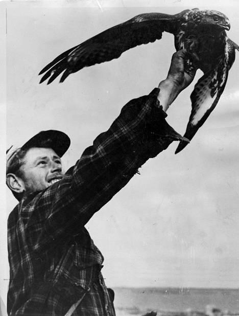 Pentti Linkola ja kalasääski vuonna 1968.