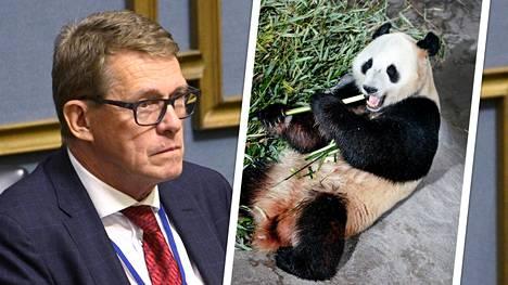 Hallituksen uudessa lisätalousarviossa Ähtärin eläinpuistolle myönnetään koronan vuoksi jättiläispandojen kuluihin 1,5 miljoonaa euroa.