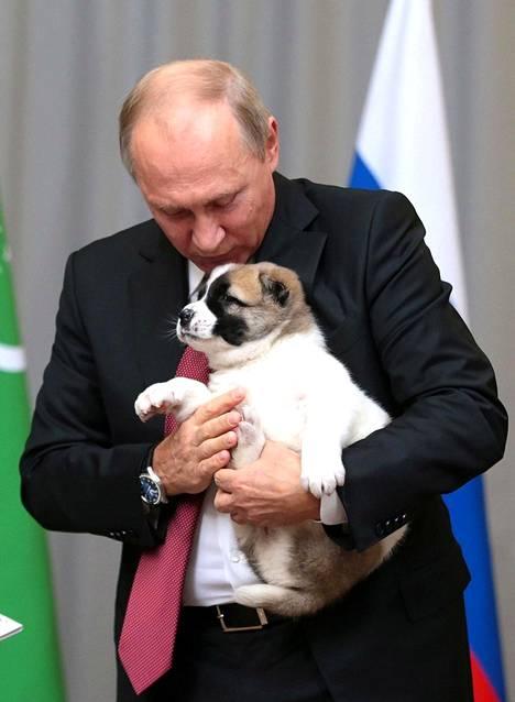 Putin on esitellyt eläinrakkauttaan mielellään myös kameroille. Turkmenistanin presidentiltä Vladimir Putin sai lahjaksi Verny-pennun 2017.