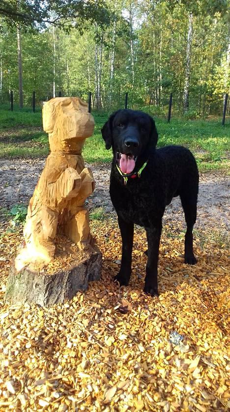 Topi-koira poseerasi mielellään koirapuiston uuden asukkaan kanssa.
