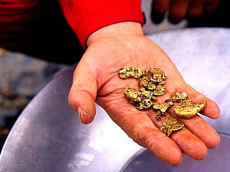 Lemmenjoella kultaa huuhtoo koneellisesti muutama kymmenen ihmistä.
