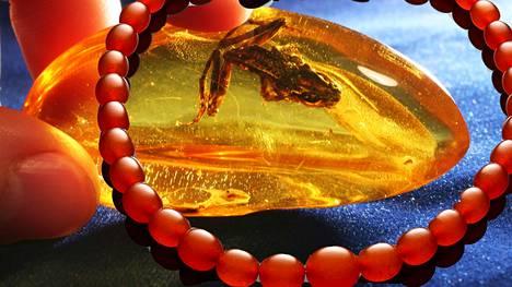 Meripihkan hintaan vaikuttaa väri ja esimerkiksi se, onko pihkan sisään jäänyt kauan sitten elänytluontokappale.