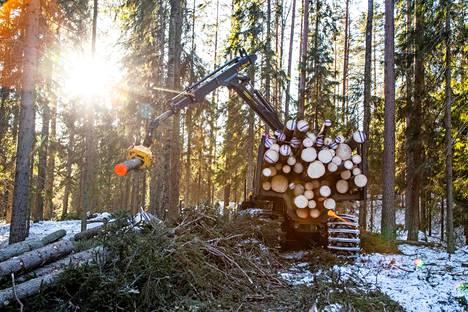 Keväinen talvipäivä oli kauneimmillaan, kun kuusi jätti kasvupaikkansa. Seuraavana päivänä se purettiin Otavassa kuljettimelle. Sahan asetukset optimoivat lautatavaran saannin tukista.