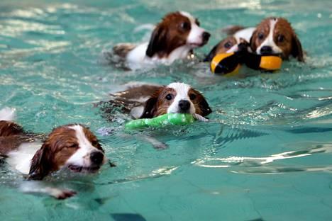 Koirat uivat hyvinkääläisessä koirakylpylässä.