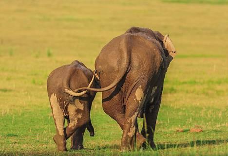Äiti ja tytär Corbettin kansallispuistossa Intiassa.