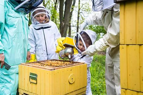 Prinssi Oscar intoutui hoitamaan mehiläispesää kumihanskat kädessään.