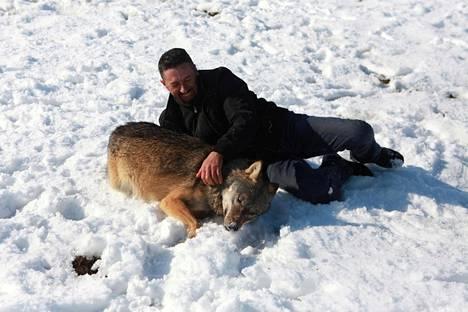 Hysni Rexha käsittelee susiaan varmoin ottein.