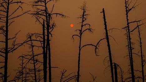 Venäjän metsäpalojen torjuntaan erikoistuneella virastolla on käytettävissä valvonta- ja sammutustöihin 250 vakituista ja 150 kausityöntekijää alueella, joka on noin viisi kertaa Ranskan kokoinen.