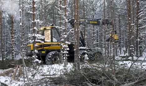 Sanginjoen alueen metsistä on kiistelty pitkään. Luonnonsuojelijat vastustivat alueen hakkuita jo 15 vuotta sitten.