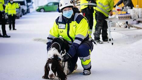 YIT:n työmailla alkaa koronakoirapilotti. Koirat eivät kuitenkaan työskentele työmaalla, vaan vapaaehtoisten osallistujien maskit viedään koirien nuuskittaviksi koulutuskeskukseen.