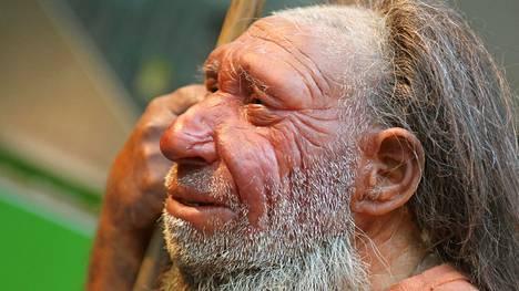 Neandertalinihminen selvisi monista jääkausista, mutta katosi syystä, jota ei tiedetä.