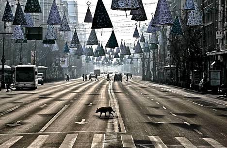 Bukarestissa Romaniassa kulkukoira ylittää vähäliikenteisen tien joulupäivänä.